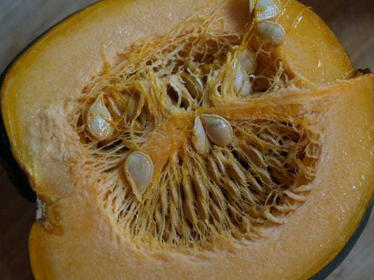 acorn3.jpg